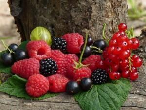 Створюємо ягідний сад з плодовими чагарниками: все від саджанців до врожаю та обрізки
