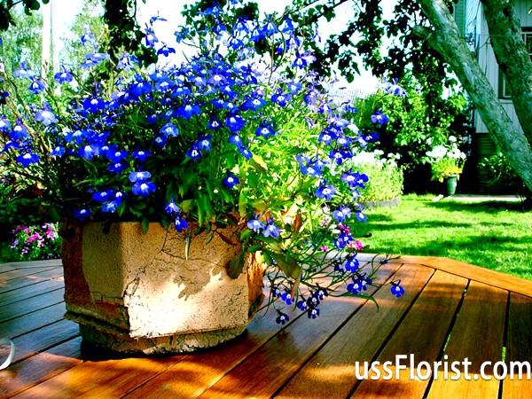 Прикраса дачної ділянки квітами