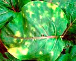 Фото - Огірки в теплиці