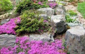Фото - рослини для альпійської гірки