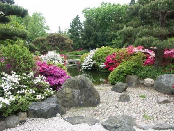 Фото - Композиція з каменів і рослин на альпійській гірці