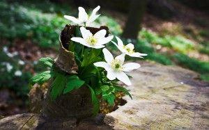 Фото - Вражаючі ідеї декору саду