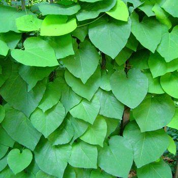 Фото - Приклад вертикального озеленення
