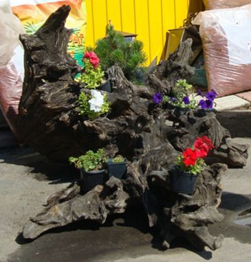 Фото - Сад коренів як елемент оформлення садової ділянки