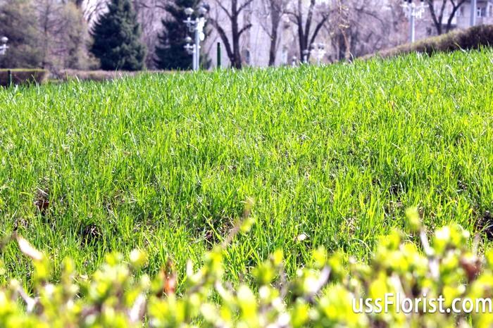 Фото - Як зробити газон своїми руками