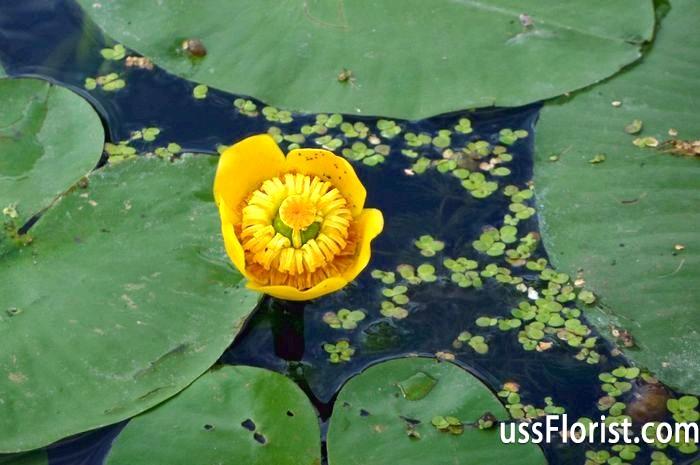 Зони водойми і різноманітність рослин для кожної з них