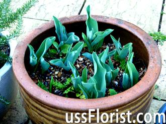 Що садять в січні на розсаду. Практичні поради початківцям городникам