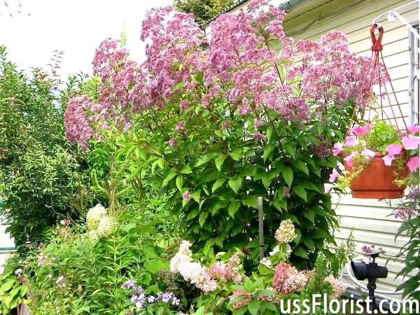 Квітучі високорослі осінні квіти на дачі