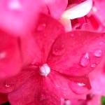 Квіти для клумб