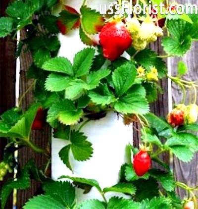 Конструкція для вирощування полуниці – фото