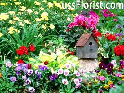 Польові квіти в оформленні саду – фото