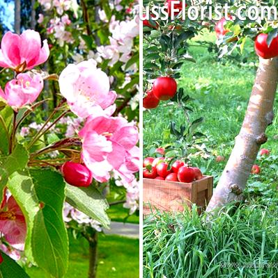 Плодовий сад на ділянці – фото