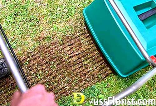 Газонна трава: секрети вирощування та догляду