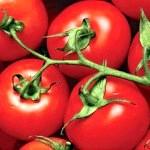 Як доглядати за помідорами