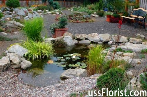 Які рослини посадити біля водойми, щоб створити гарний дизайн на дачі.