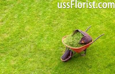 Вивіз трави з газону – фото
