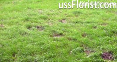 Лисини на газоні – фото
