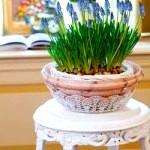 Полиці та підставки для кімнатних квітів