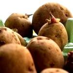 Посадка картоплі по Мітлайдера