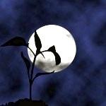 Посадка розсади за місячним календарем