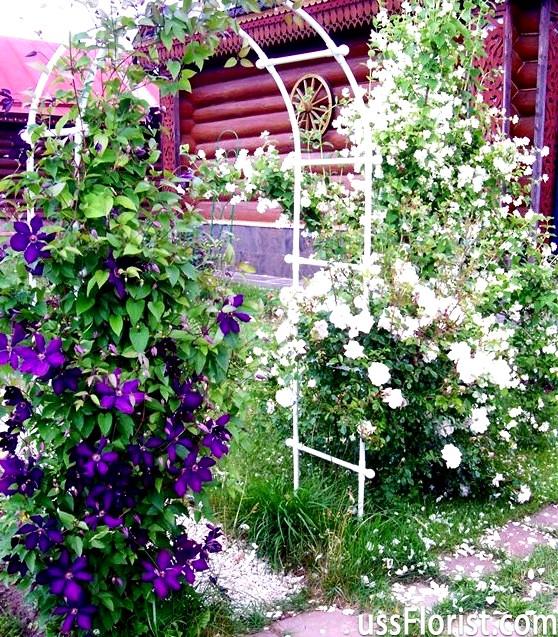 Кучеряві квіти для дачі
