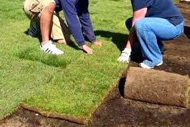 Технологія укладання рулонного газону