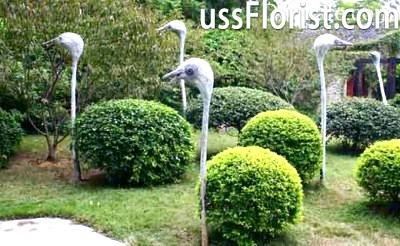 Каркасний топиарий страуси – фото