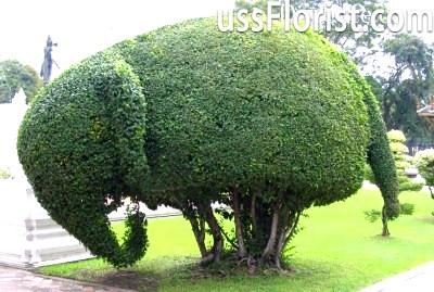 Топиарий слон – фото