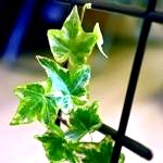 Вибираємо кучеряве кімнатні квіти для вирощування